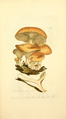Coloured Figures of English Fungi or Mushrooms - t. 185.png