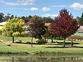 Colours of autumn of parks around Quart Pot Creek, Stanthorpe, 2017.jpg