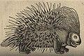 Conradi Gesneri medici Tigurini Historiae animalium lib. I 1551 (26481987) (cropped).jpg