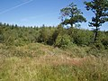 Cookworthy Moor Plantation - geograph.org.uk - 511907.jpg
