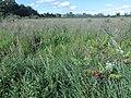Cooper Marsh Conservation Area 30.jpg