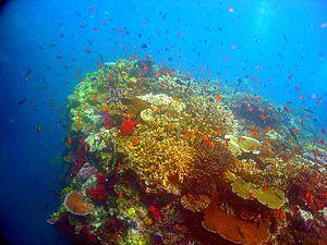 Les récifs corraliens, et certains planctons produisent le carbonate de calcium qui constitue le principal puits de carbone océanique et planétaire