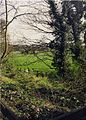 Countryside, Cheshire - scan04.jpg