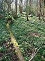 Coxhill Woods - geograph.org.uk - 400052.jpg