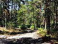 Coyolles (60), la cave du Diable en forêt de Retz 2.jpg