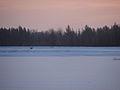 Coyote before dawn (6822760961).jpg