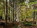 Creech Woods - geograph.org.uk - 1021887.jpg