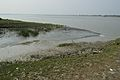 Creek - Riverbank Ichamati - Sundarban Biodiversity and Interpretation Area - Taki - North 24 Parganas 2015-01-13 4674.JPG