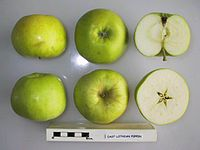 Cross section of East Lothian Pippin, National Fruit Collection (acc. 1949-279).jpg