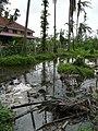 Cyclone Nargis (10690956103).jpg