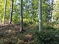 Długota (Opawskie Mountains), 2020.09.11 16.jpg