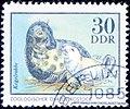 DDR. 20. Kegelrobbe.jpg
