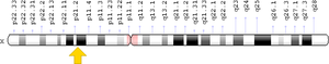Dystrophin - Image: DMD gene location