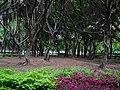 Daan Forest Park 大安森林公園 - panoramio (7).jpg