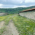 Daisy fields.Asclepieion (Pergamon).jpg