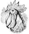 Darwin Domestic 130.png