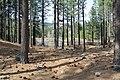 Davis Creek Park - panoramio (21).jpg