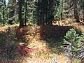 Dead Horse Creek trail in mid September 2015. (676053ccc857491eb180a8620db5bb12).JPG
