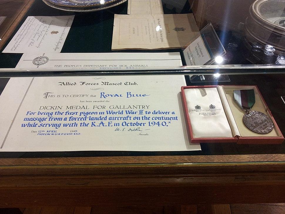 Dickins Medal for Pigeon Royal Blue