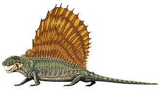 Dimetrodon - Restoration of Dimetrodon grandis