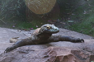 Disney's Animal Kingdom - Komodo dragon in Asia