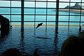 DolphinShedd.jpg