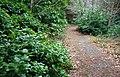 Donard Forest, Newcastle (3) - geograph.org.uk - 640697.jpg