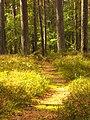Druvciems - panoramio (38).jpg
