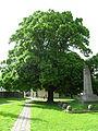Dunabogdányi öreg hársfa.JPG