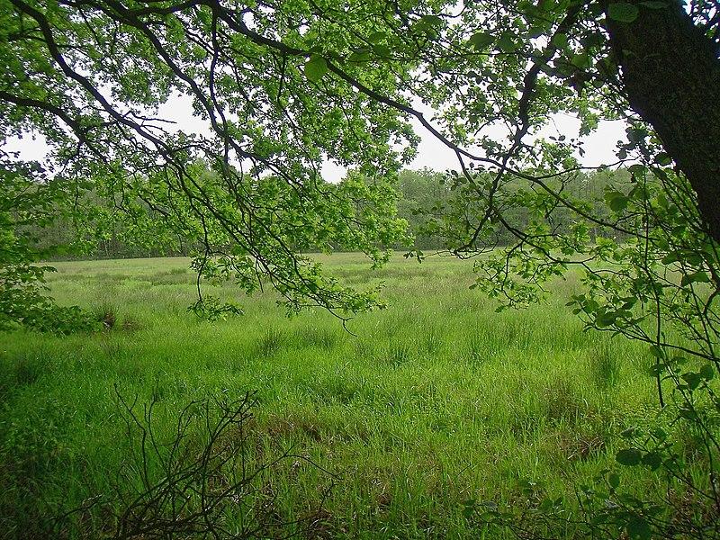 File:Duvenstedter brook langenhorstwiesen 2.jpg