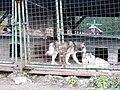 Dvoračky, psí kotec (01).jpg