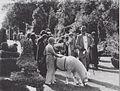 Earl in Lowther Castle Garden 1930s.jpg
