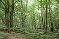 Edge of Ludshott Common - geograph.org.uk - 29781.jpg