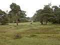 Edge of the New Forest east of Fox Hill - geograph.org.uk - 70518.jpg