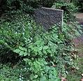 Edith Mendelssohn Bartholdy -grave.jpg