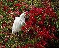 Egret (48114749863).jpg