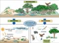 Ekosistema.png