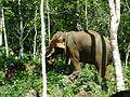 Elephant eat palm.jpg
