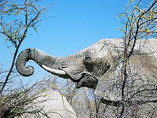 Elephant grasping thorn tree by mexikids.jpg