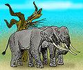 Elephas reckii.jpg