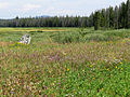 Elk Meadow (15383628192).jpg