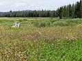 Elk Meadow (15383628192).jpg