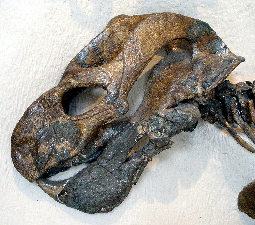Endothiodon angusticeps
