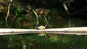 Eno River State Park - Wildlife is plentiful in the park