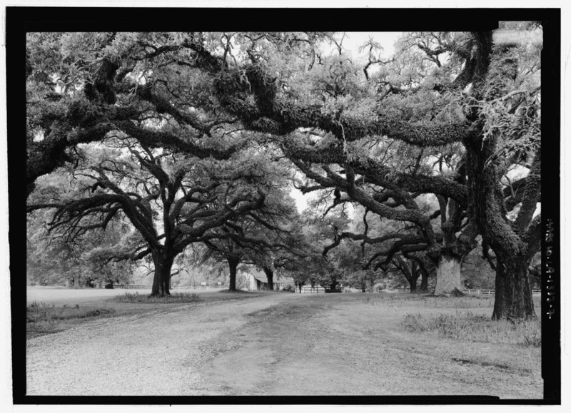 File:Environmental view looking from main house towards the commissary (duplicate of HABS No. LA-1333-2 (ct)) - Atahoe Plantation, 1843 Bermuda Road, Natchez, Natchitoches Parish, LA HABS LA-1333-7.tif