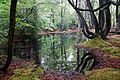 Epping Forest High Beach Essex England - spring pond 09.jpg