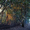 Epping Forest High Beach Waltham Abbey Essex England - Mott Street 03.jpg