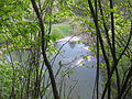Eschelbronn Naturschutzgebiet Kallenberg 11.JPG