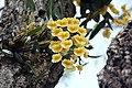 FLOWERS 4 (7237994112).jpg