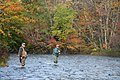 Fall fishing on the salmon river - panoramio.jpg
